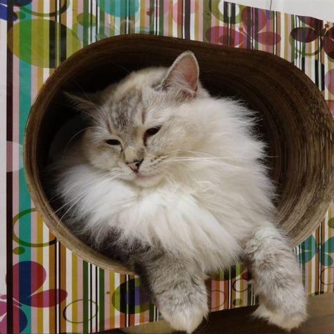 Arranhador-para-Gatos-em-Papelao-Pet-Games-Cat-Box-Oval-Colorido-7898947774299-pet-luni