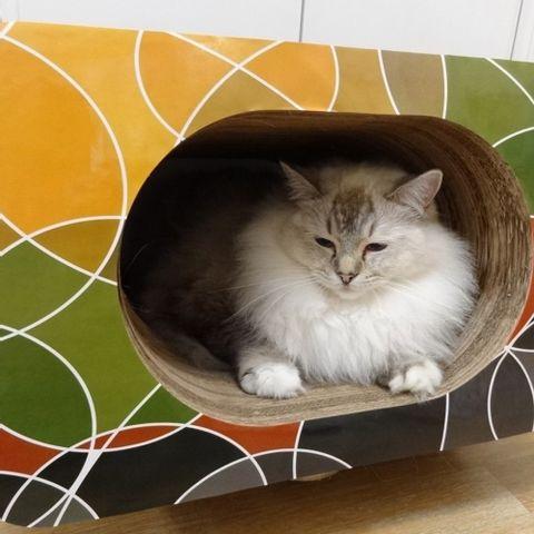 Arranhador-para-Gatos-em-Papelao-Pet-Games-Cat-Box-Oval-Marrom-7898947774336-pet-luni